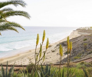 Club Esquinzo Playa 019