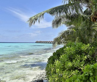 Club Maldives 015